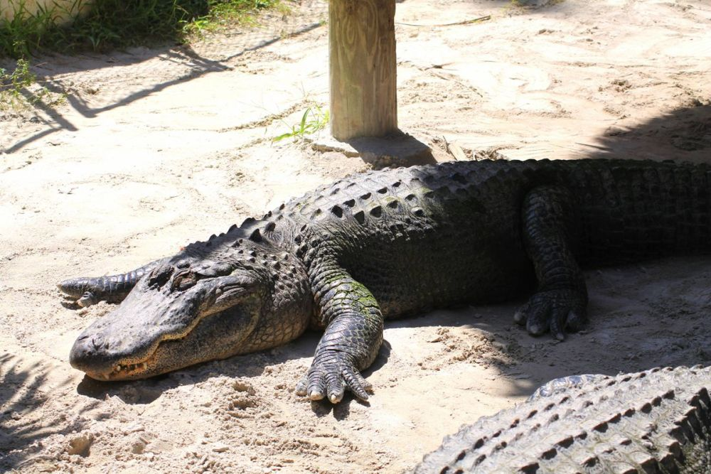 Things to do in Florida: Visiting The Everglades on Hand Luggage Only Blog (12)