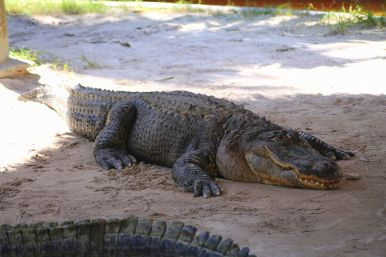 Things to do in Florida: Visiting The Everglades on Hand Luggage Only Blog (11)