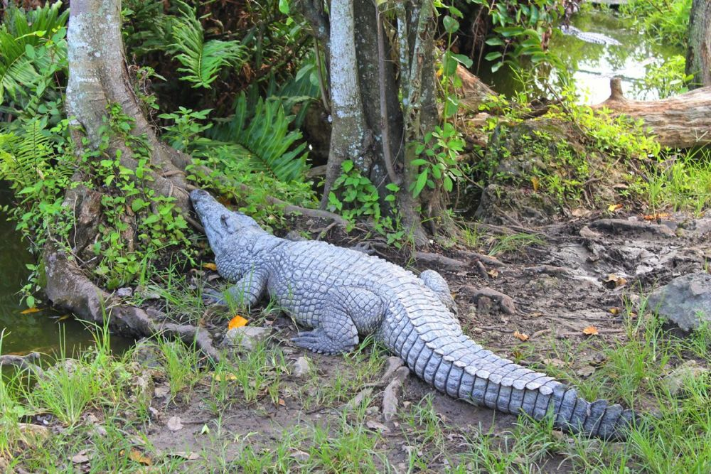 Things to do in Florida: Visiting The Everglades on Hand Luggage Only Blog (18)