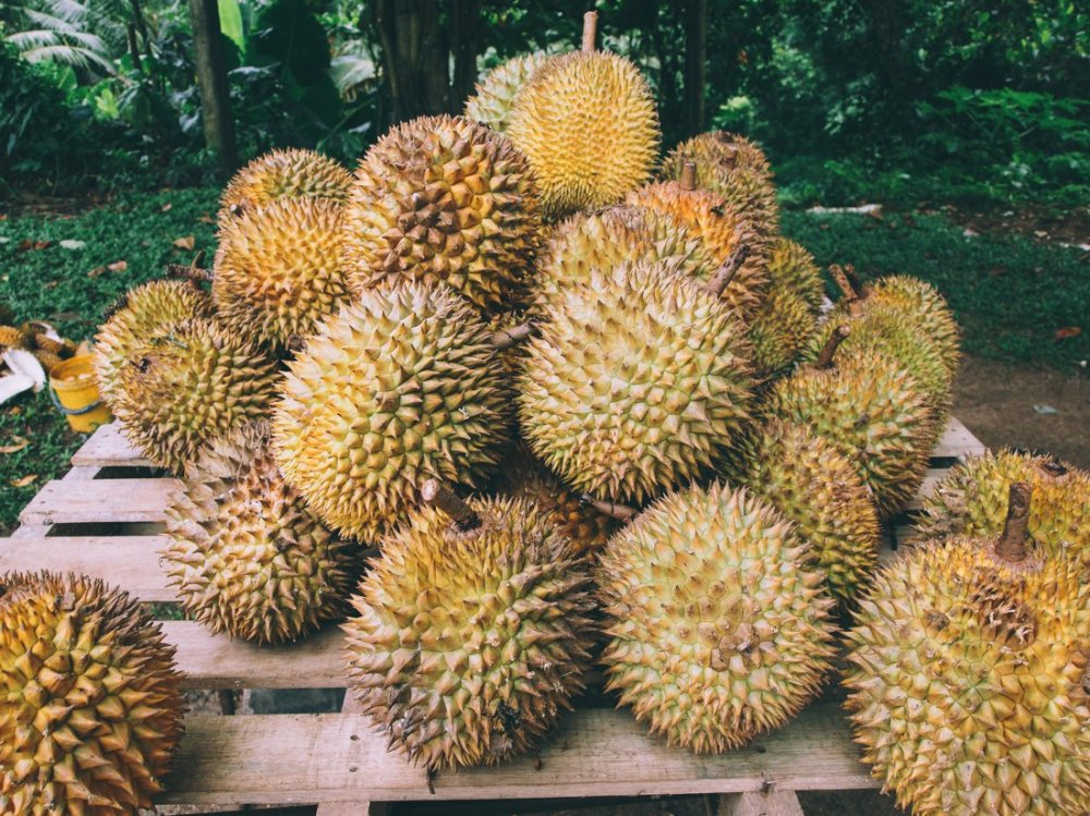 Advice on eating Stinky Smelly Durian Fruit (3)