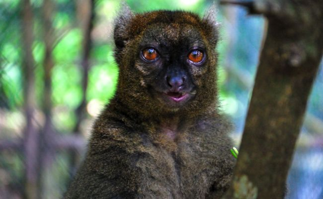 16 Of The Rarest Animals In The World And Where To See Them Hand Luggage Only Travel Food
