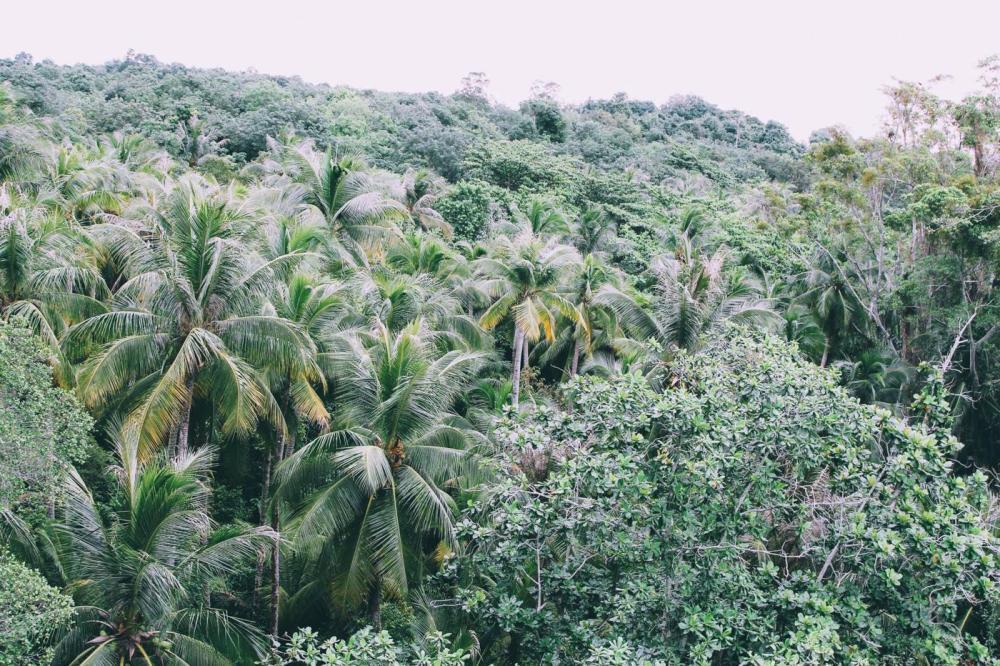 Going Off The Beaten Track in Singapore: Exploring Ubin Island... (6)