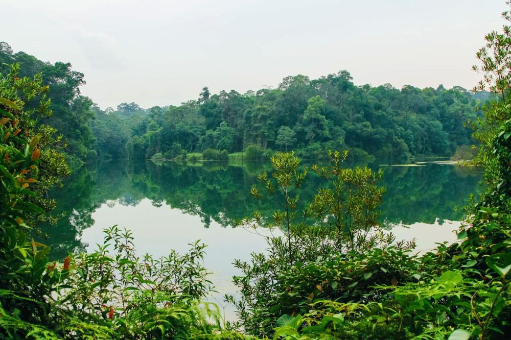 MacRitchie Nature Trail, Singapore Travel (8)