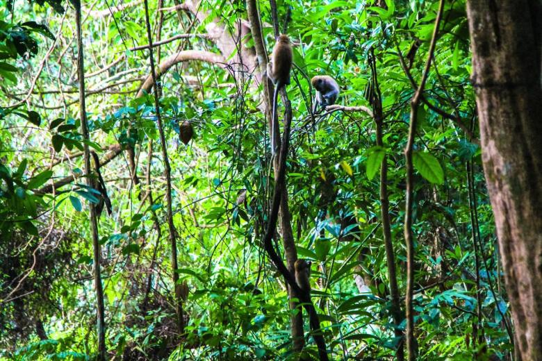 MacRitchie Nature Trail, Singapore Travel (5)