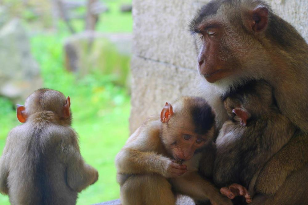 Animals at ZOOM Erlebniswelt Gelsenkirchen, Germany (3)