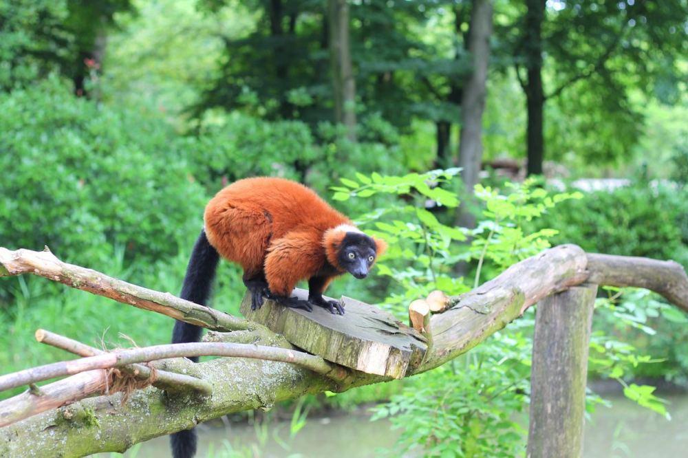 Animals at ZOOM Erlebniswelt Gelsenkirchen, Germany (21)