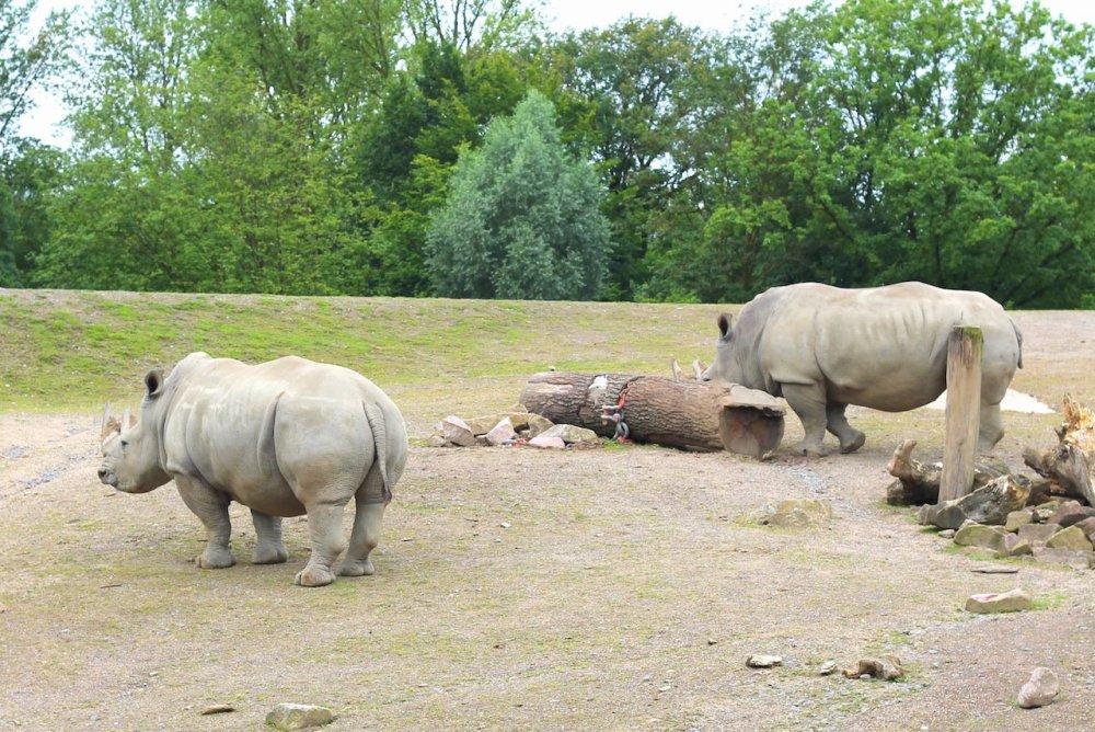Animals at ZOOM Erlebniswelt Gelsenkirchen, Germany (19)