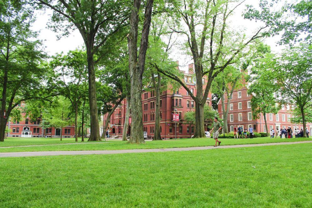 Squirrels, Strawberries And Frozen Yoghurts in Harvard (10)