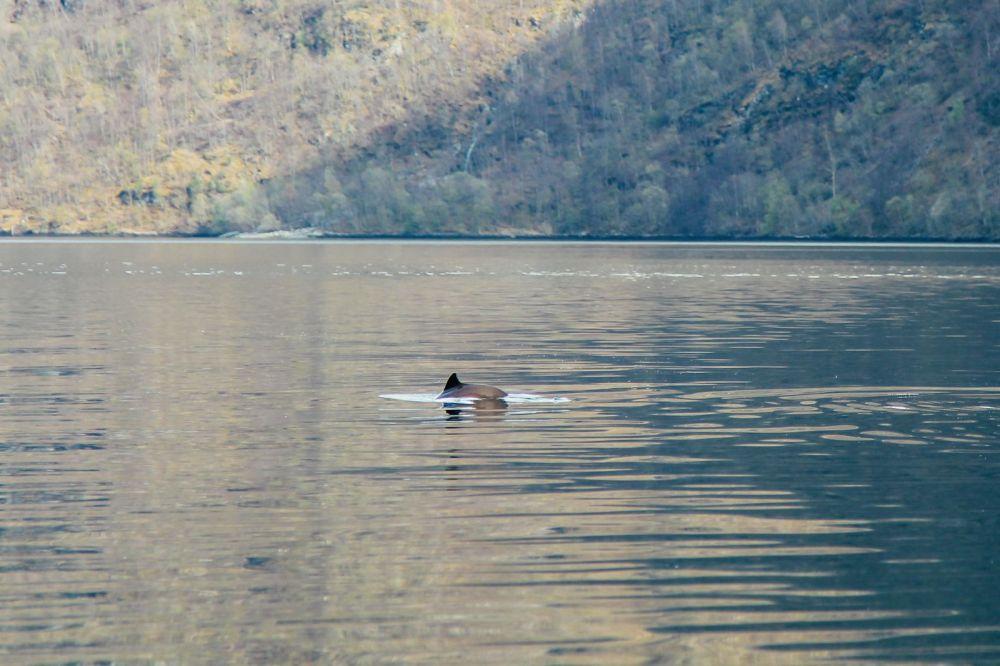 Fjord Safari... in Flam, Norway (37)