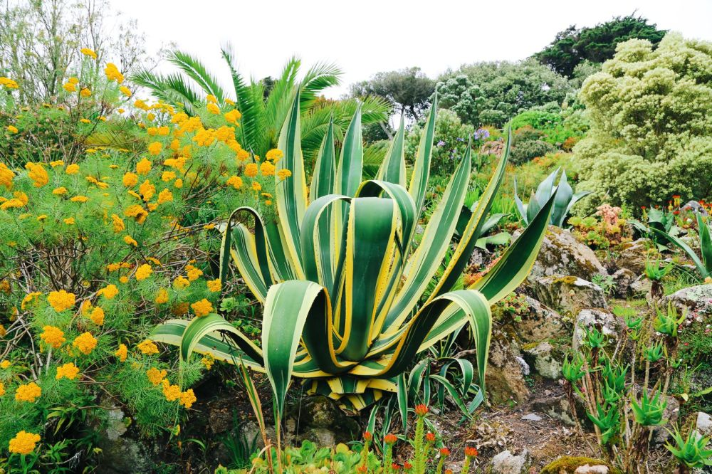 A Day On Tresco Island! Tresco Abbey Gardens (38)