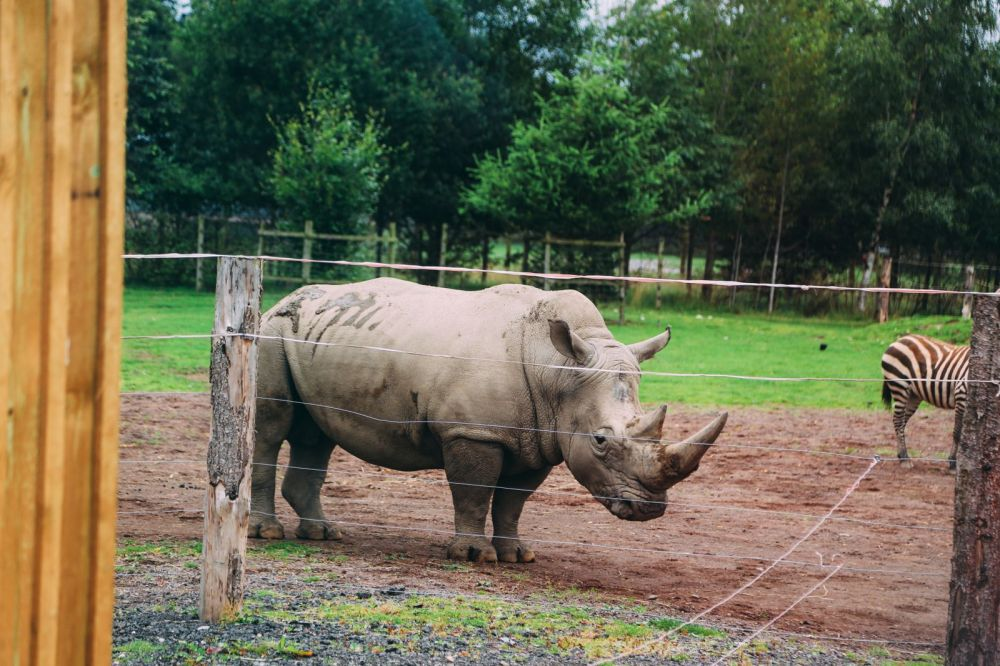 Safari In Scotland - The Photo Diary at Blair Drummond Safari and Adventure Park (1)