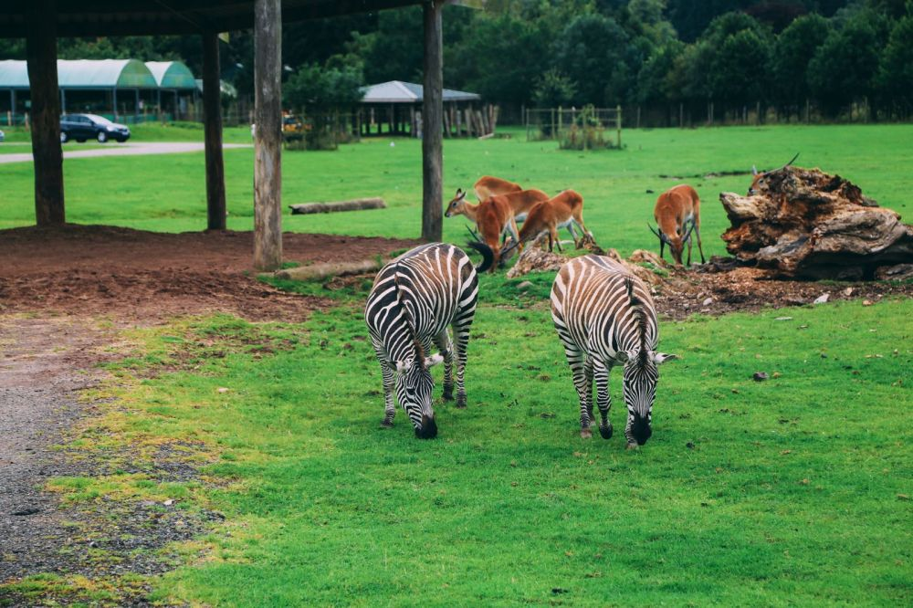 Safari In Scotland - The Photo Diary at Blair Drummond Safari and Adventure Park (2)