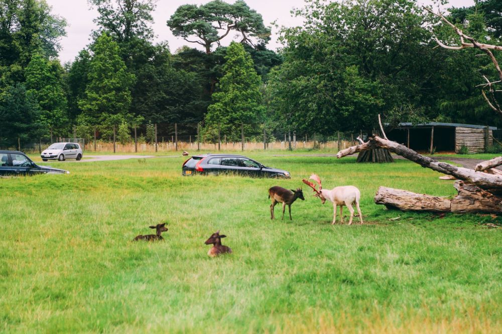 Safari In Scotland - The Photo Diary at Blair Drummond Safari and Adventure Park (6)