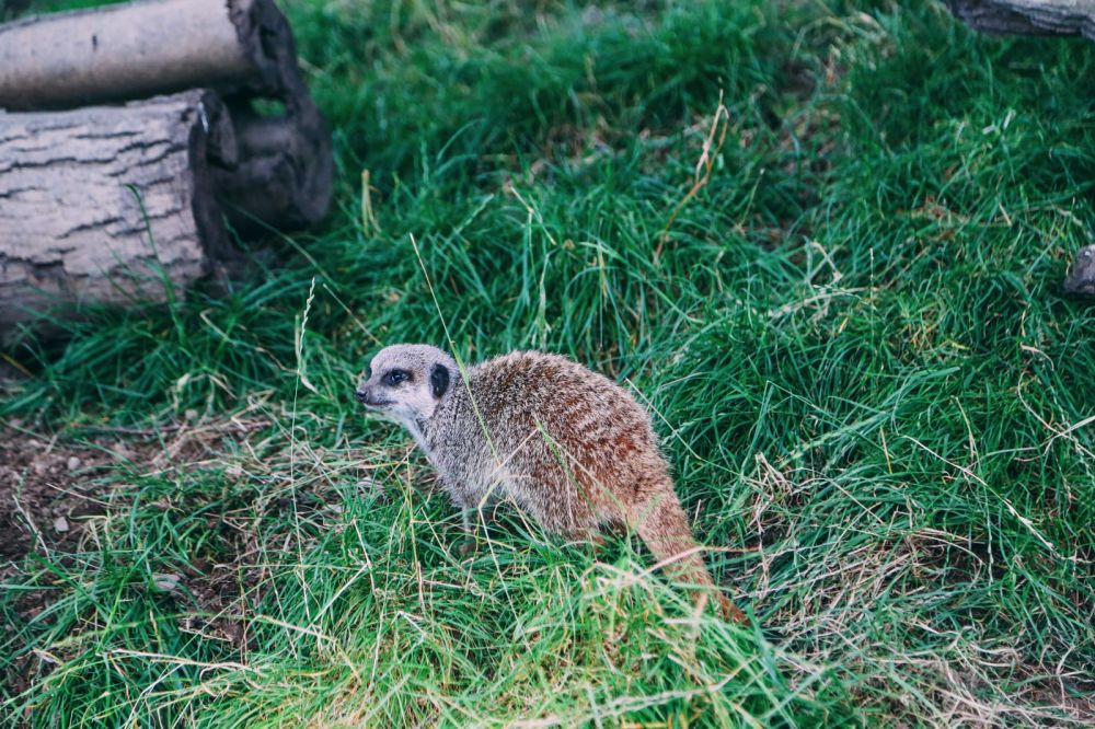 Safari In Scotland - The Photo Diary at Blair Drummond Safari and Adventure Park (17)