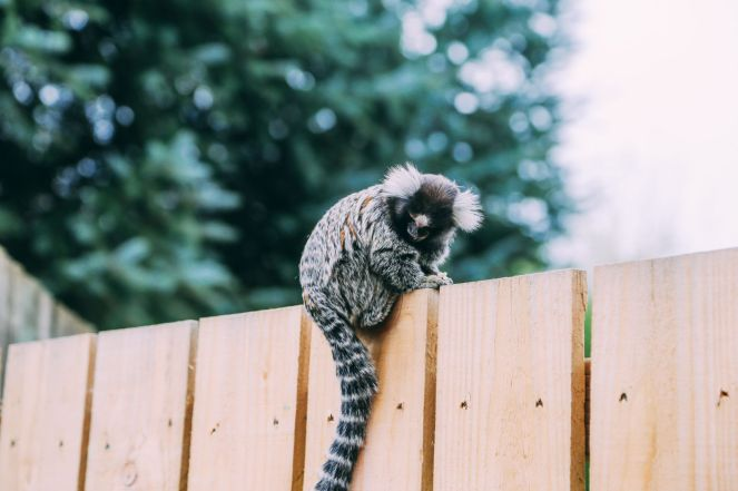 Safari In Scotland - The Photo Diary at Blair Drummond Safari and Adventure Park (20)