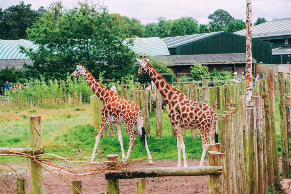 Safari In Scotland - The Photo Diary at Blair Drummond Safari and Adventure Park (37)