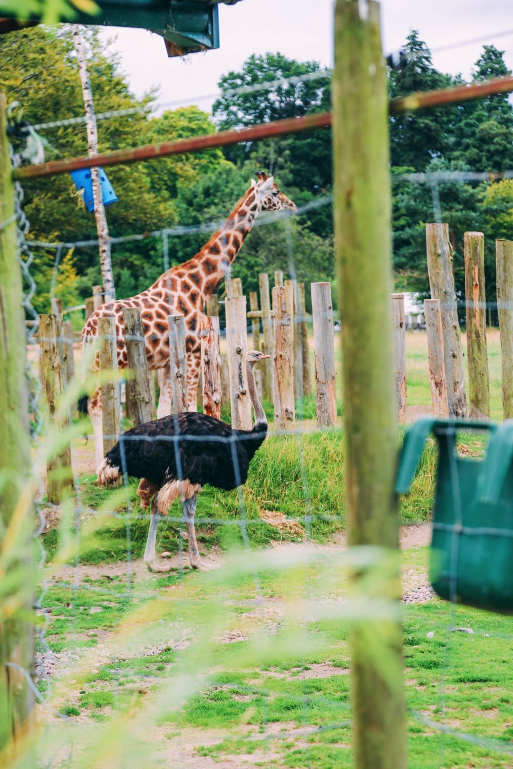 Safari In Scotland - The Photo Diary at Blair Drummond Safari and Adventure Park (38)