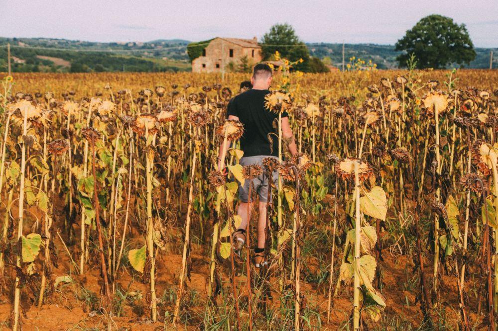Sunflower Fields... (7)