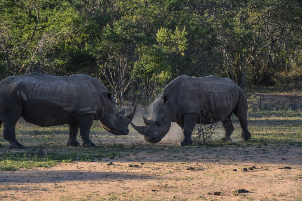 Some Really Important Things You Need To Know About Poaching In Africa (10)