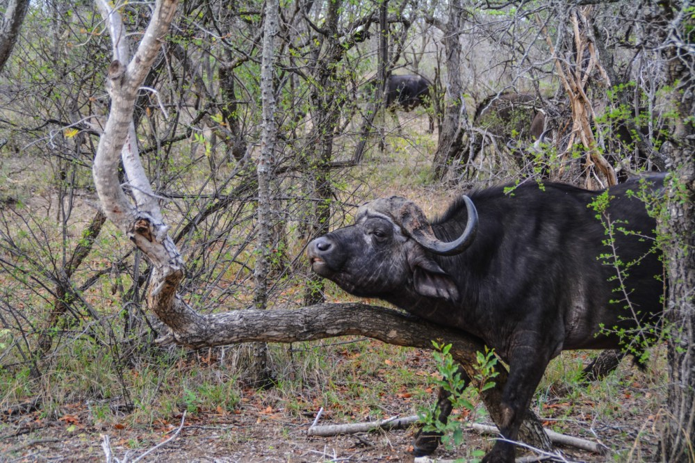 Some Really Important Things You Need To Know About Poaching In Africa (25)