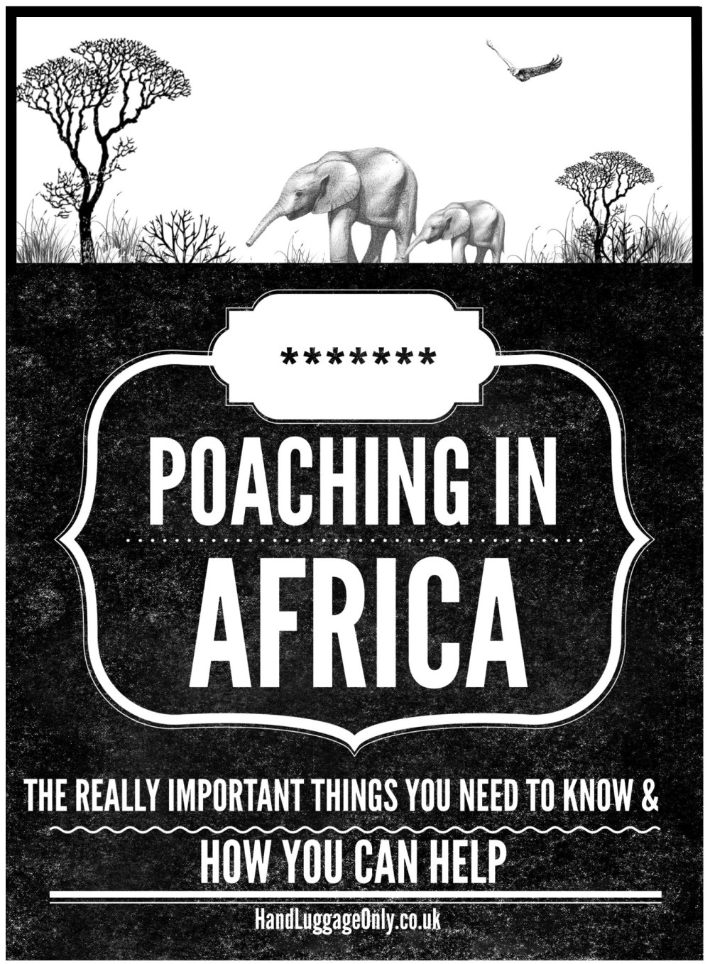 Some Really Important Things You Need To Know About Poaching In Africa (1)