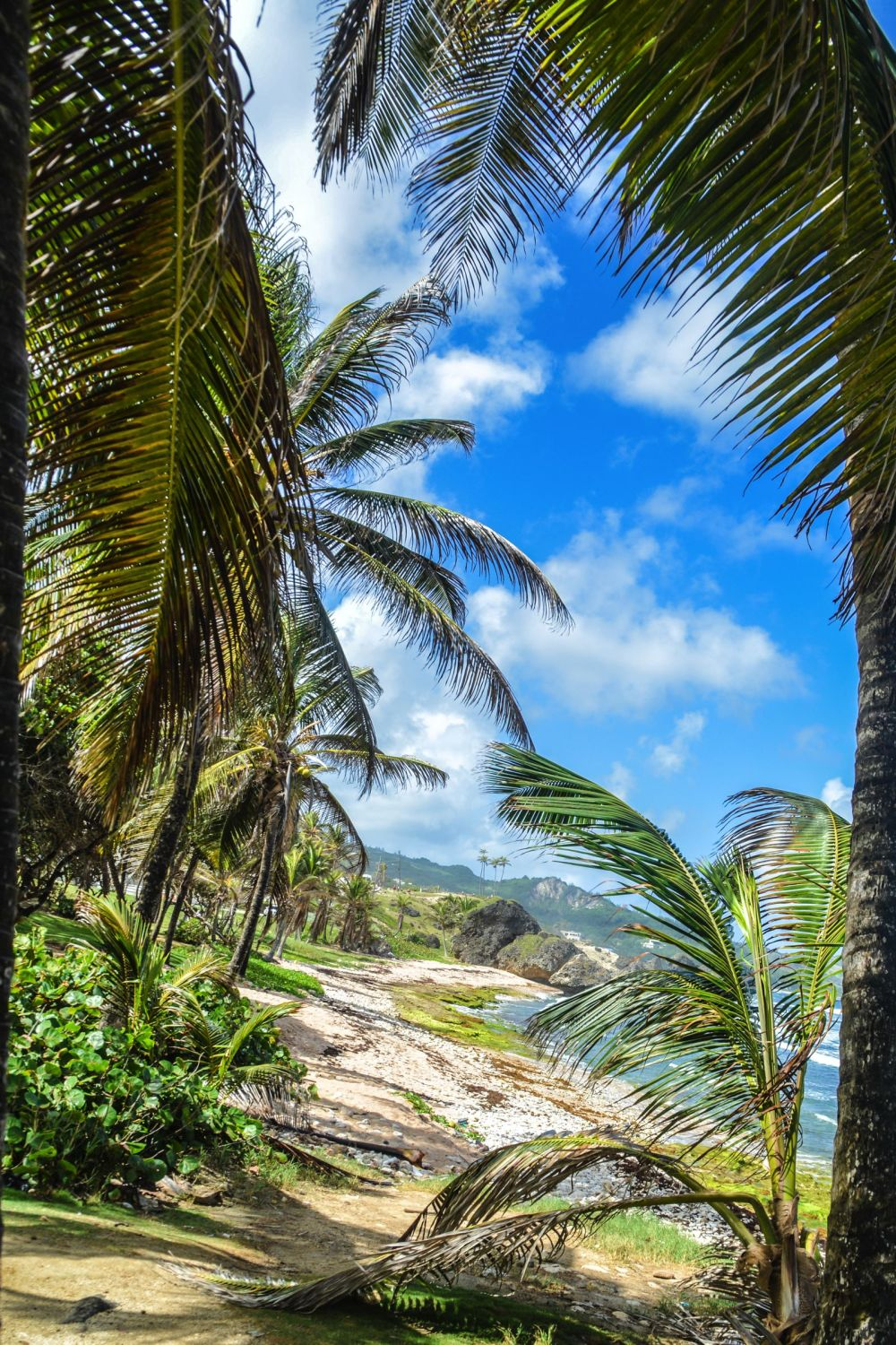 Exploring The Unspoilt Beauty of East Barbados (33)