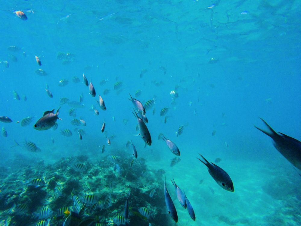 Sailing In Barbados - Swimming With Turtles and Puffer Fish (19)