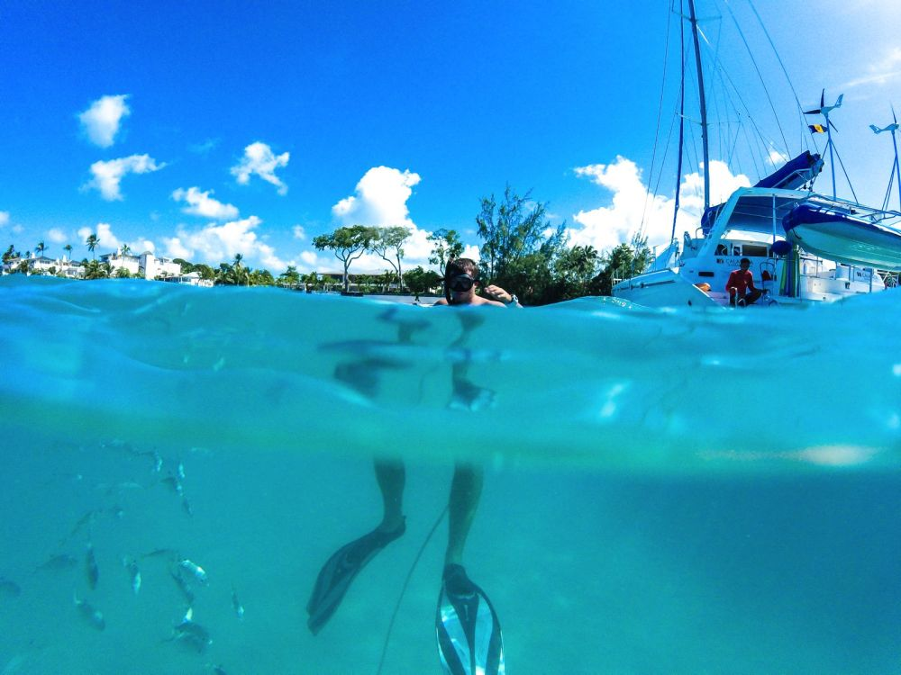 Sailing In Barbados - Swimming With Turtles and Puffer Fish (25)