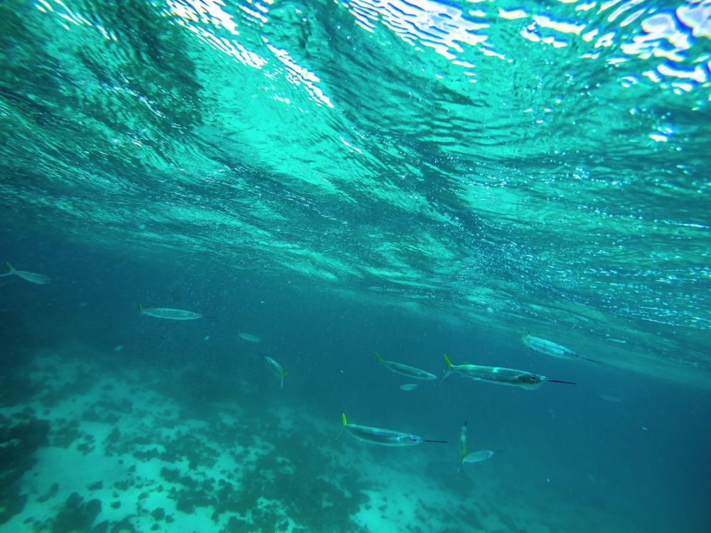 Snorkelling In Antigua - The Photo Diary (2)