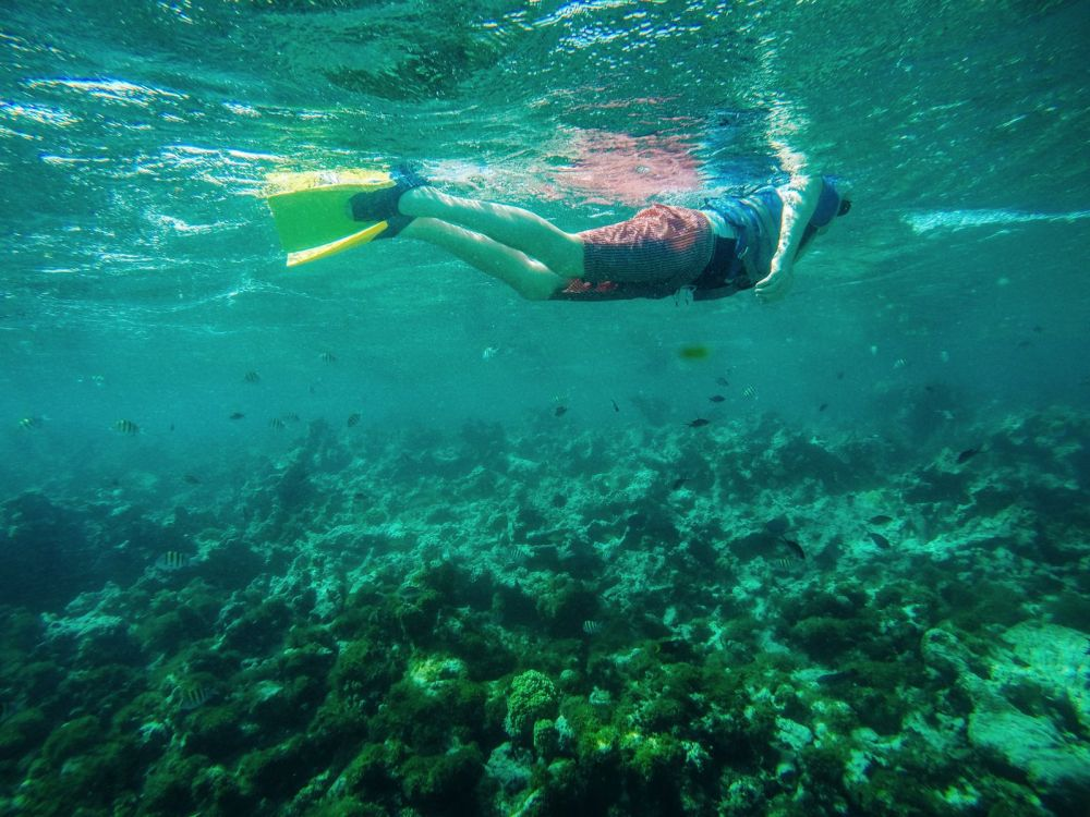 Snorkelling In Antigua - The Photo Diary (21)