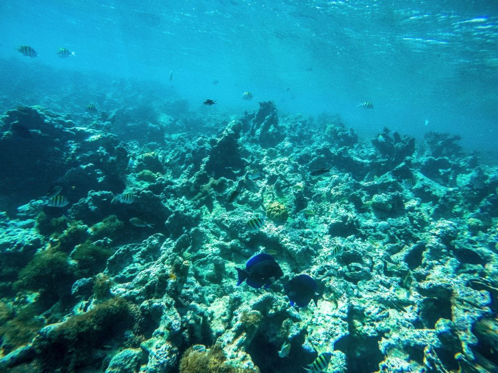 Snorkelling In Antigua - The Photo Diary (22)