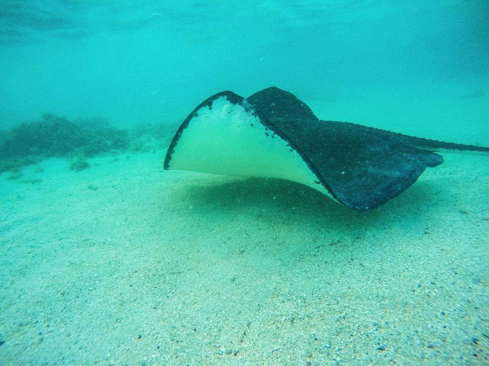 How To Swim With Wild Stingrays In Antigua (26)