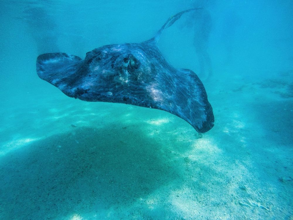 How To Swim With Wild Stingrays In Antigua (25)