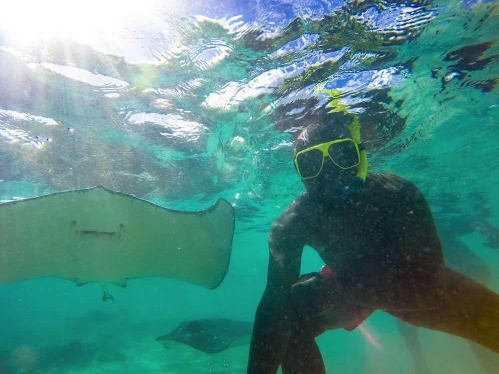How To Swim With Wild Stingrays In Antigua (8)