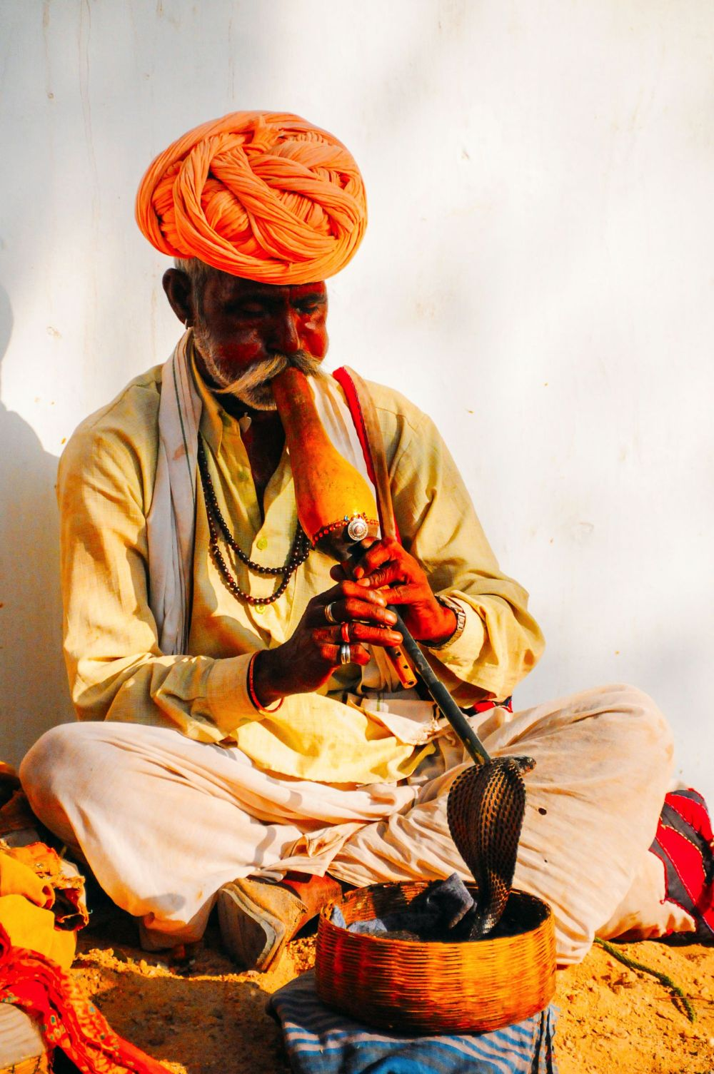 Snake Charming Cruelty (3)