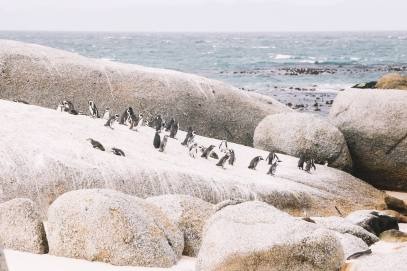 How To Visit Penguin Beach In South Africa (23)