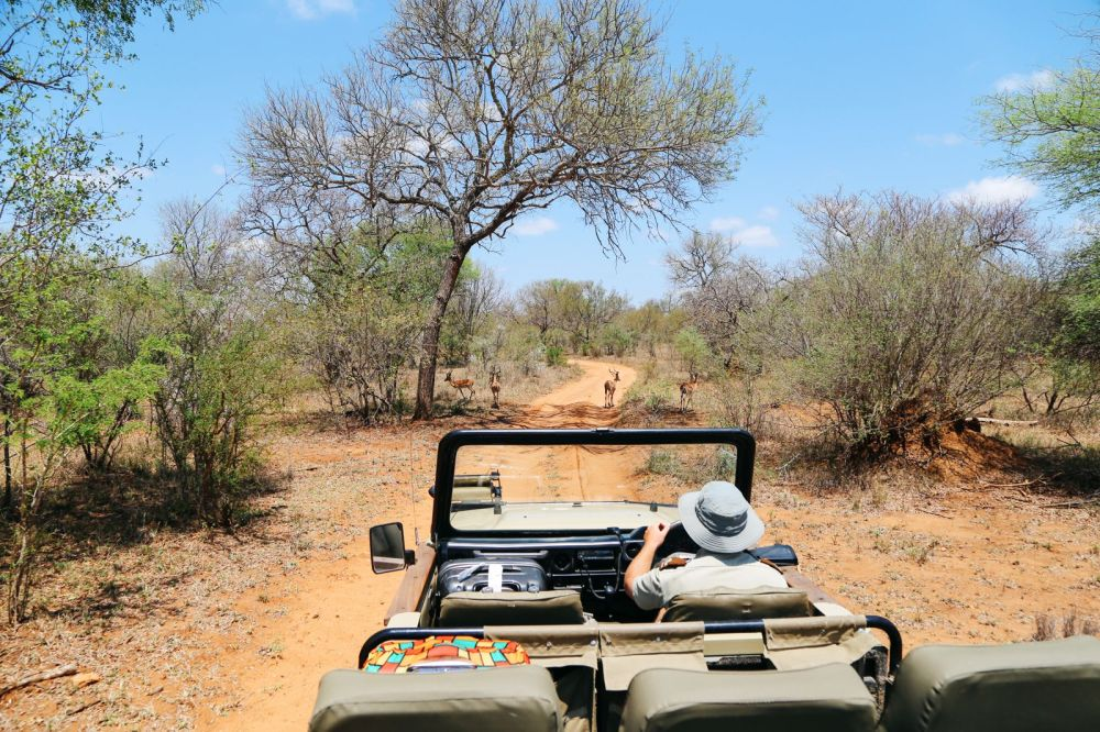 Arriving On Safari In South Africa... (Definitely Not Your Average Airport Transfer!) (10)