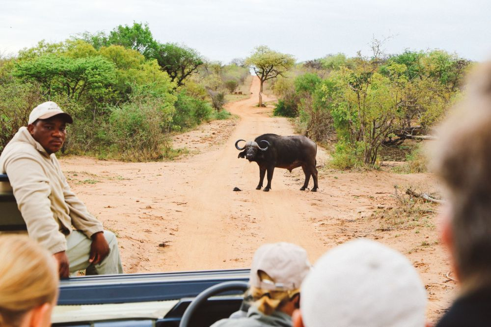 Midnight Lions, Skittish Giraffes And The Deadliest Of The Safari Big 5 In South Africa (11)