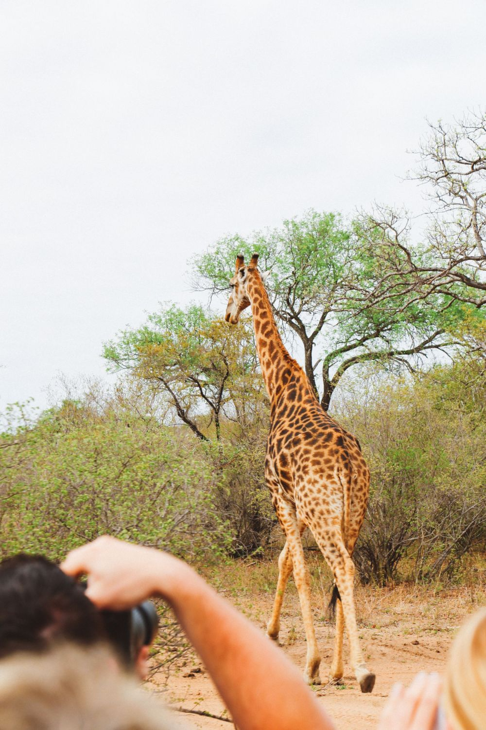 Midnight Lions, Skittish Giraffes And The Deadliest Of The Safari Big 5 In South Africa (14)