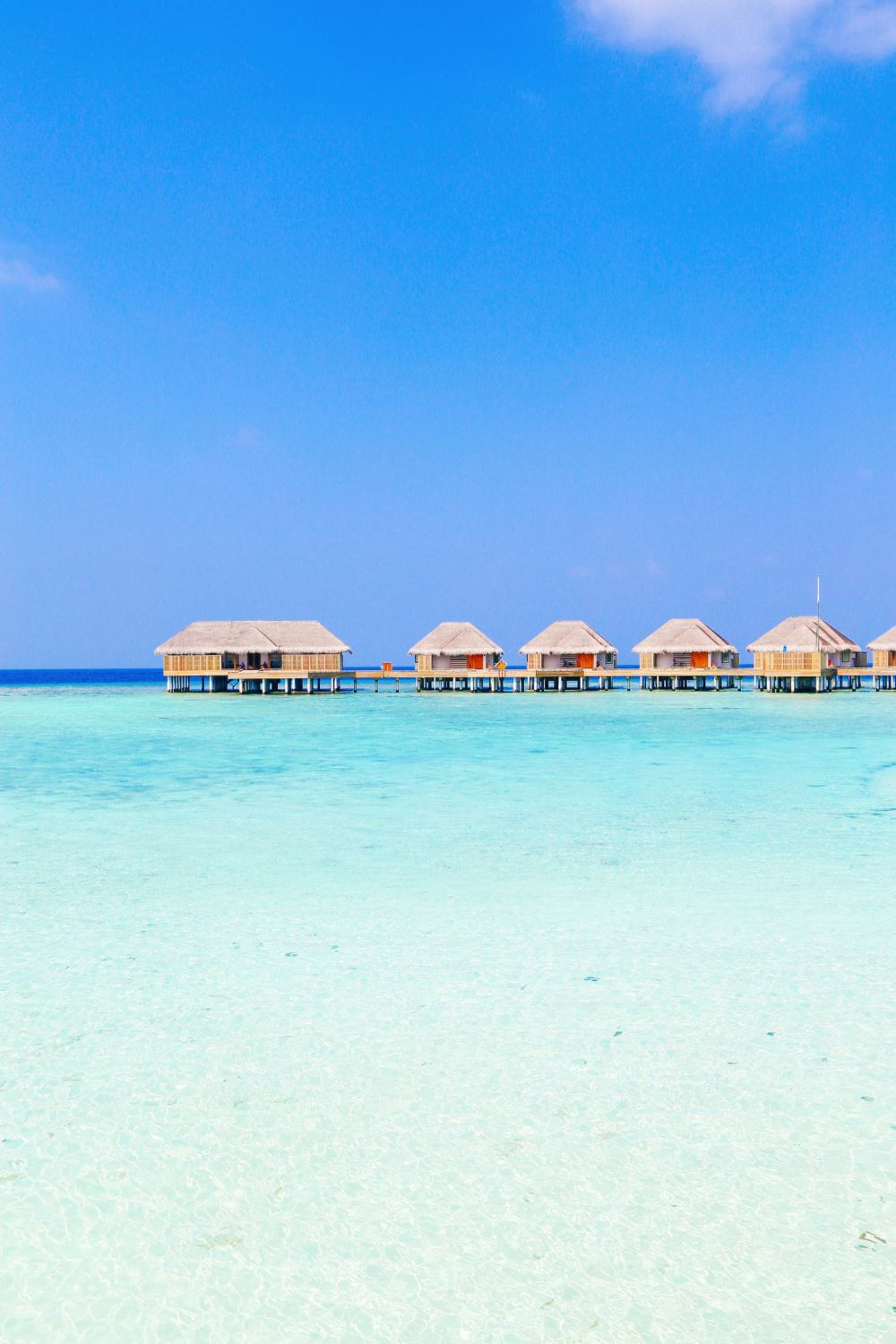 Reef Explorers In The Maldives (9)