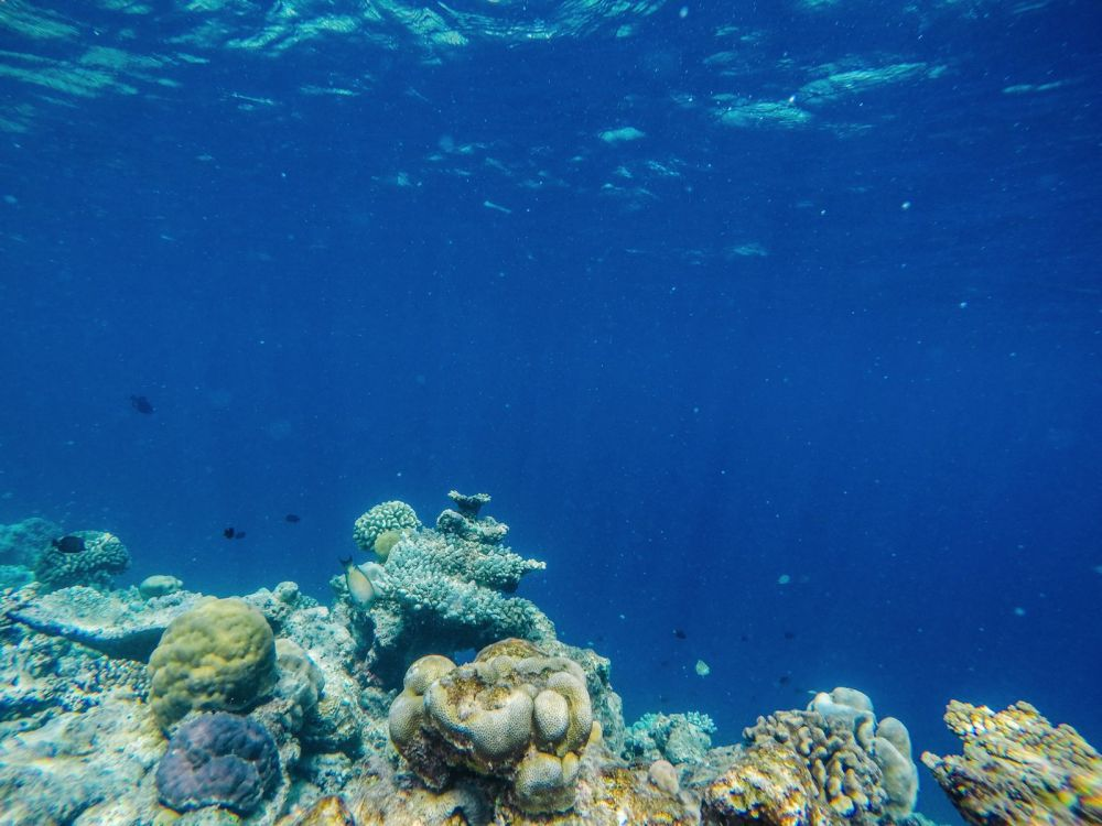 Reef Explorers In The Maldives (13)