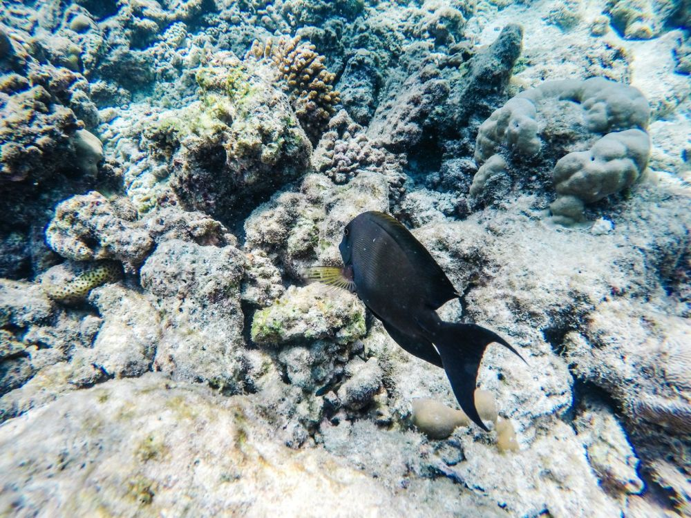 Reef Explorers In The Maldives (18)