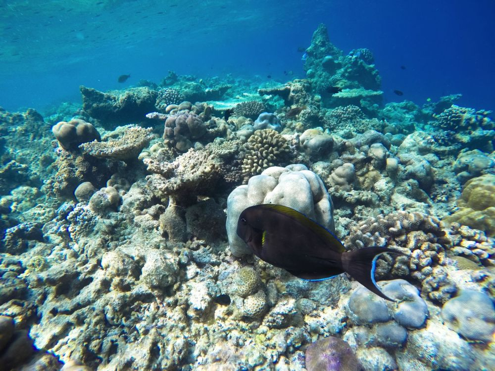 Reef Explorers In The Maldives (25)