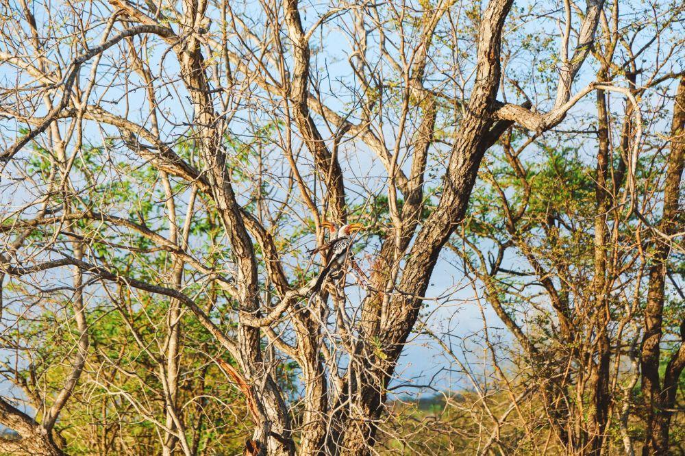Sunrise Till Sunset - A 24 Hour South African Safari Diary (1)