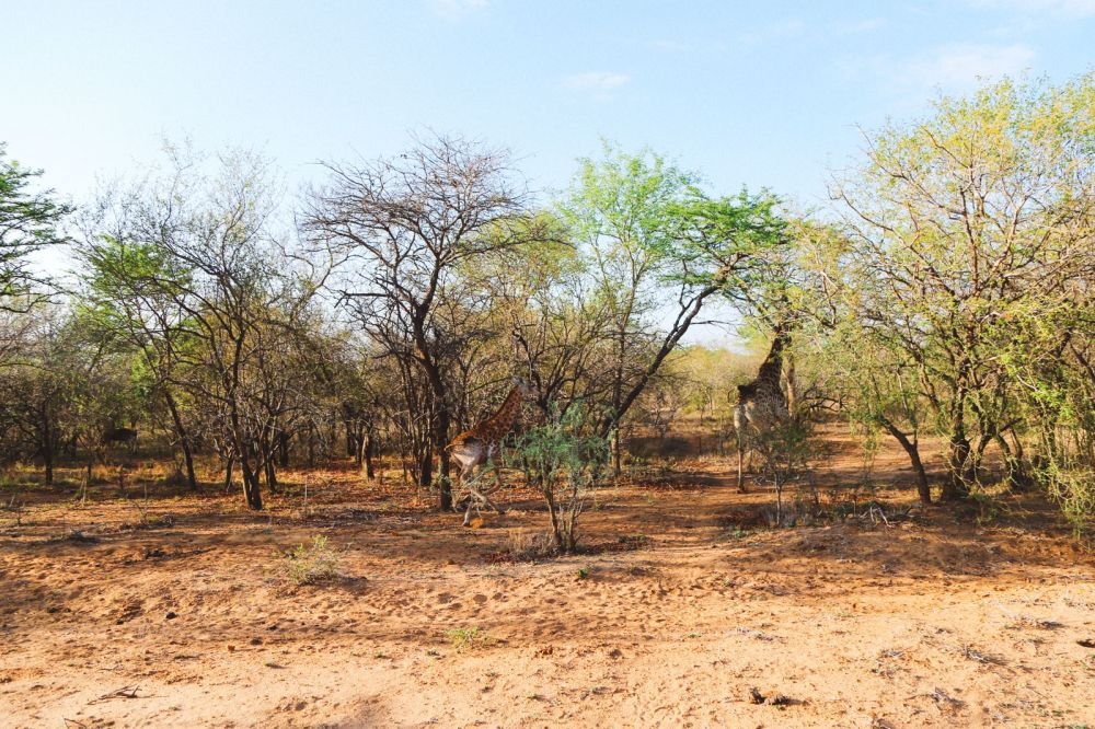 Sunrise Till Sunset - A 24 Hour South African Safari Diary (4)