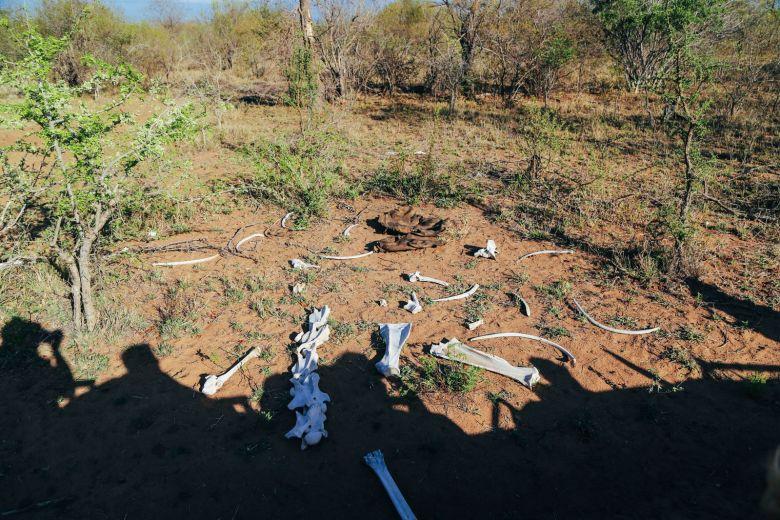 Sunrise Till Sunset - A 24 Hour South African Safari Diary (9)