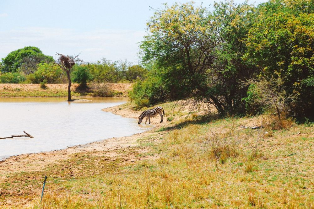Sunrise Till Sunset - A 24 Hour South African Safari Diary (30)