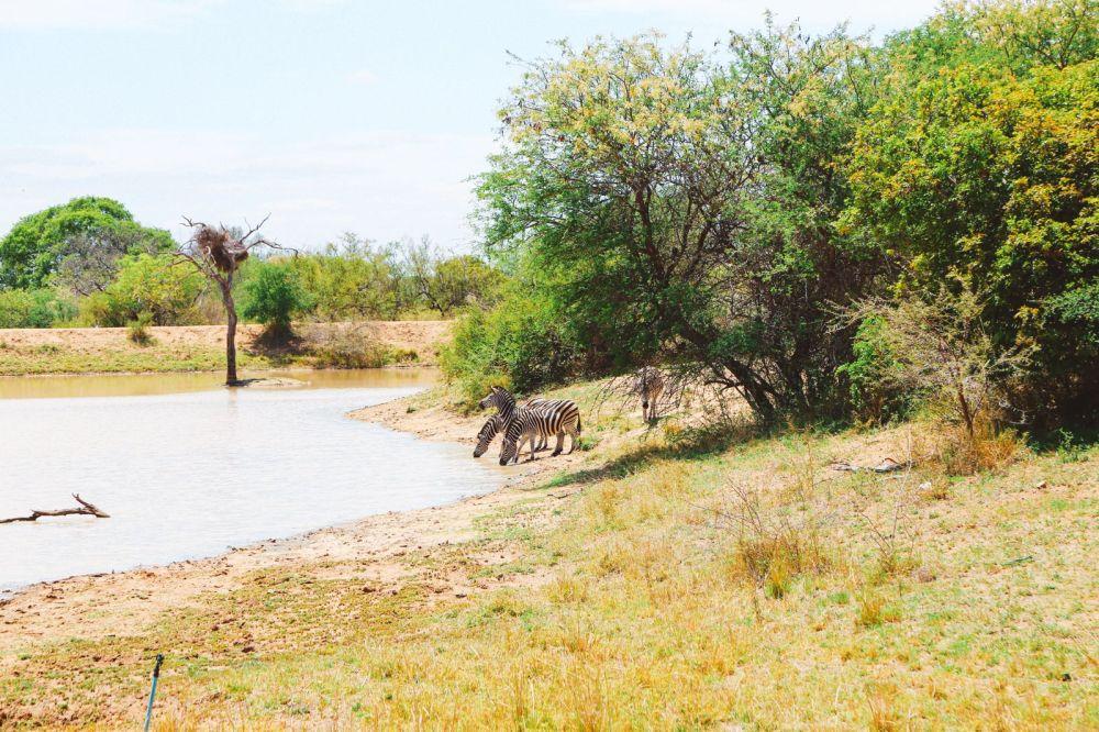 Sunrise Till Sunset - A 24 Hour South African Safari Diary (31)