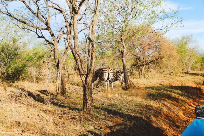 Sunrise Till Sunset - A 24 Hour South African Safari Diary (37)