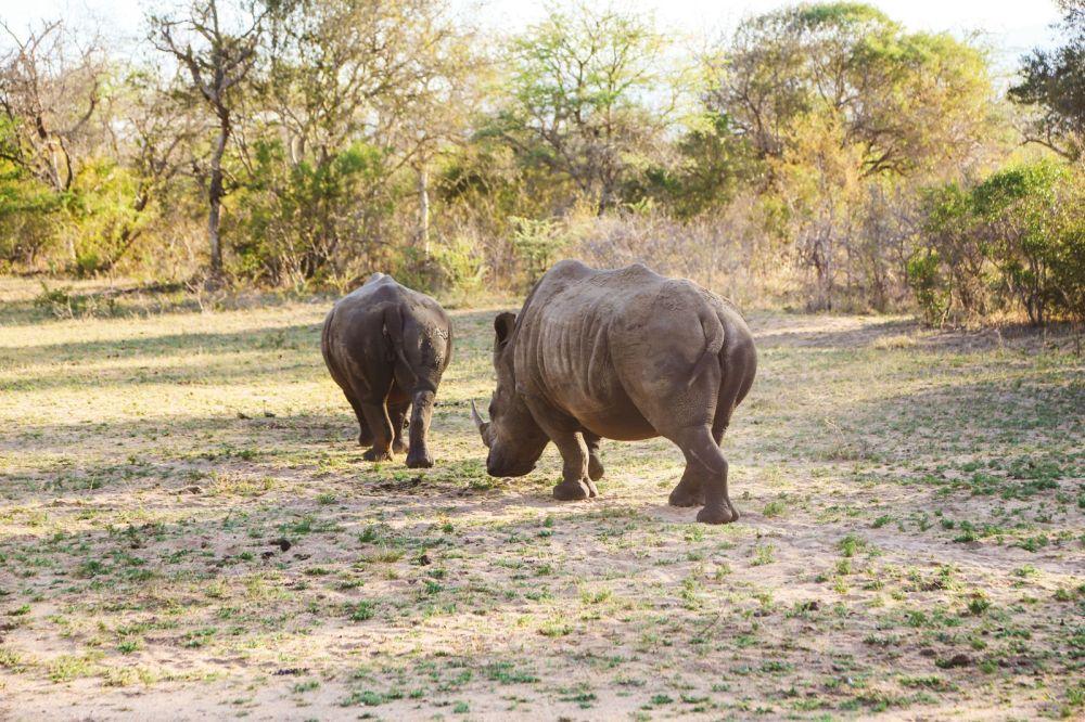 Sunrise Till Sunset - A 24 Hour South African Safari Diary (45)